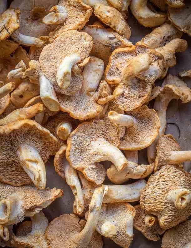 Hedgehog mushrooms or Hydnum umbillicatum