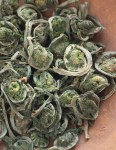 Dried or dehydrated fiddlehead ferns