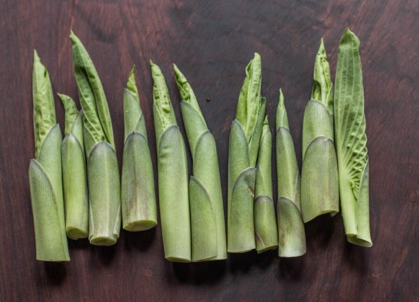 Edible hosta shoots or urui