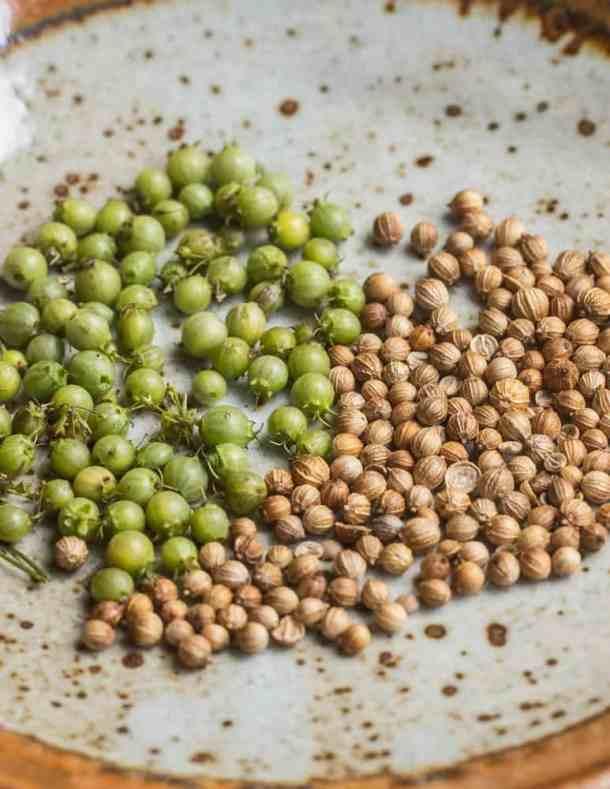 Green unripe coriander and dried coriander