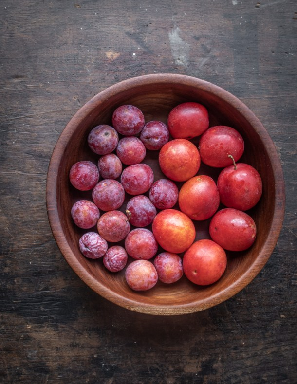 Canadian and American Plums