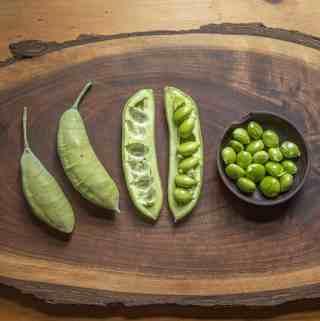 Green Kentucky coffee beans (14)