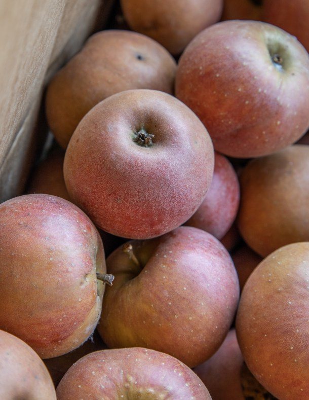 Heirloom russet apples