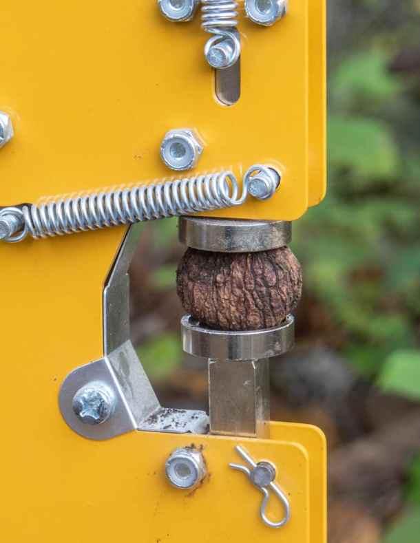 Cracking black walnuts in Grandpa's Goody Getter