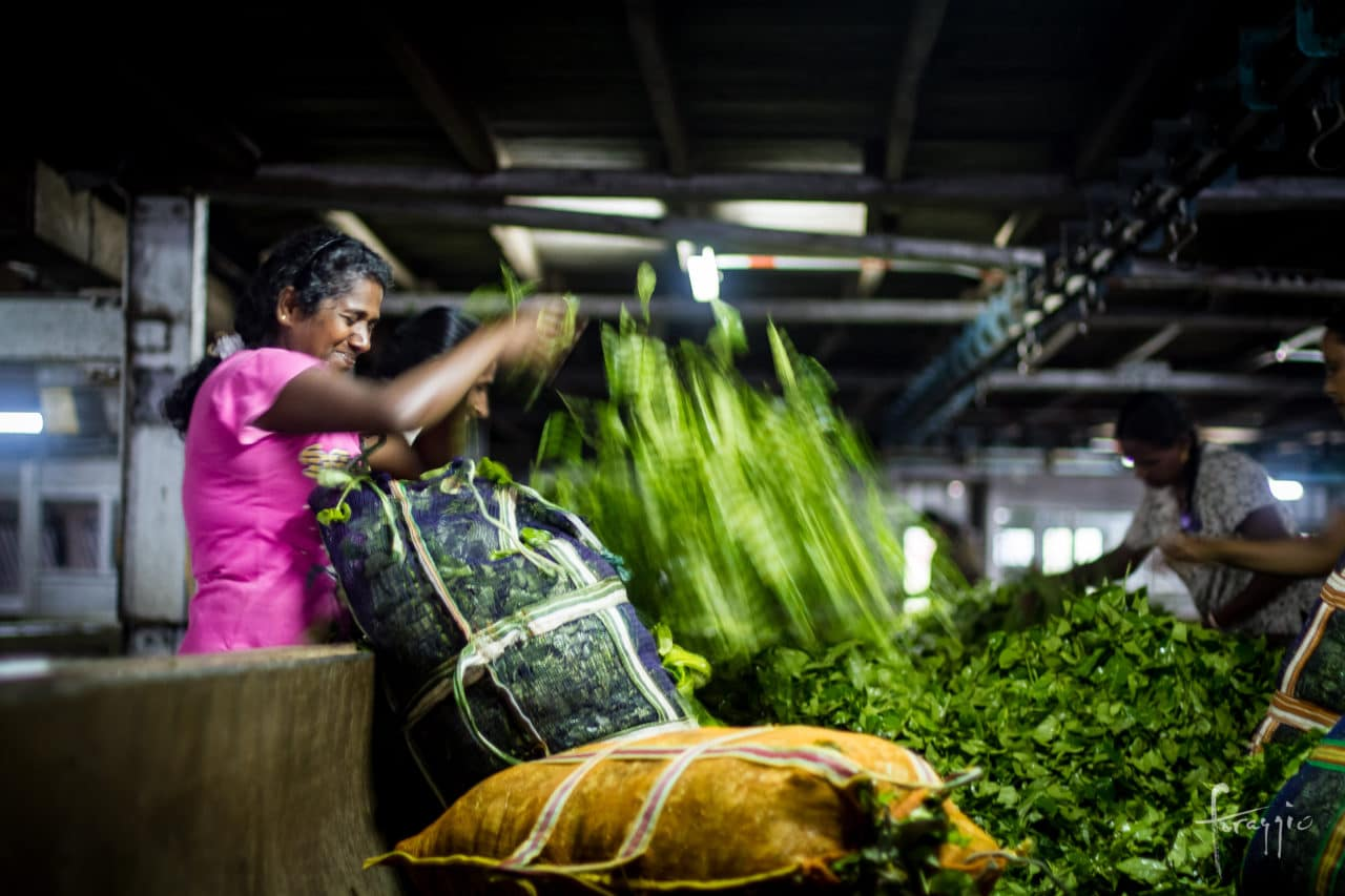 Tea workers | Sri Lanka | Foraggio Photographic
