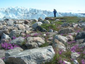Kallina near Russell Glacier, in western Greenland