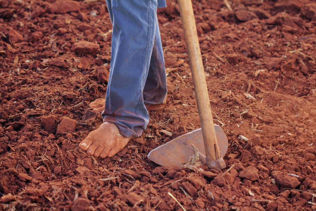 Trabajo investiga las irregularidades laborales y sanitarias en explotaciones agrarias como uno de los focos de rebrotes