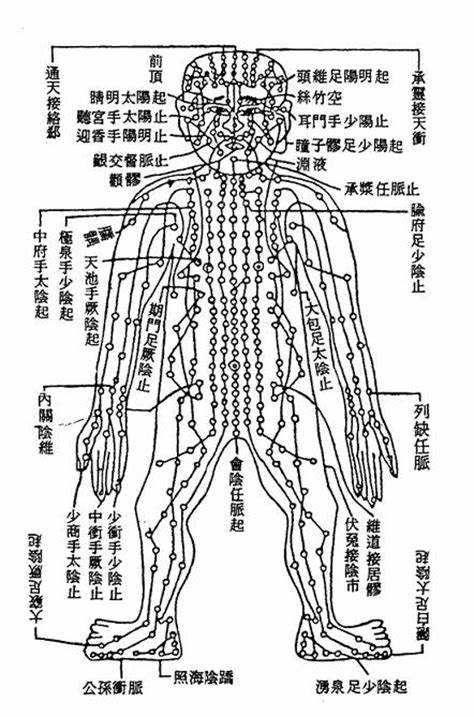 chinese anatomy human body chinese acupuncture