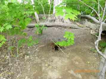 172+00 190601 E at off-ROW fox den