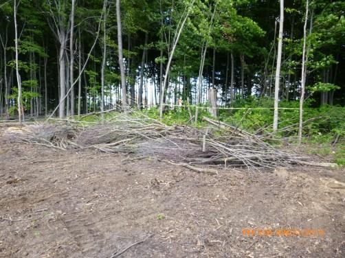 protective brush at off-ROW fox den