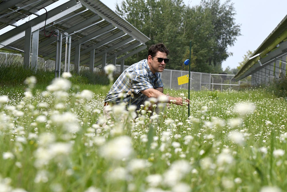 Scientific Research Takes Root at Michigan's Newest Solar Site