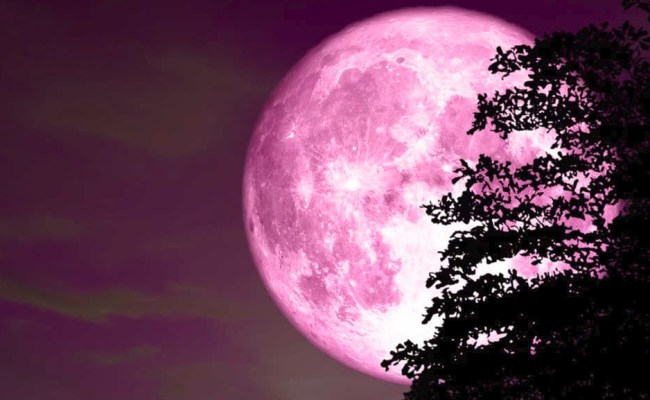 We Will Meet Pink Moon In A Two Days On April 19