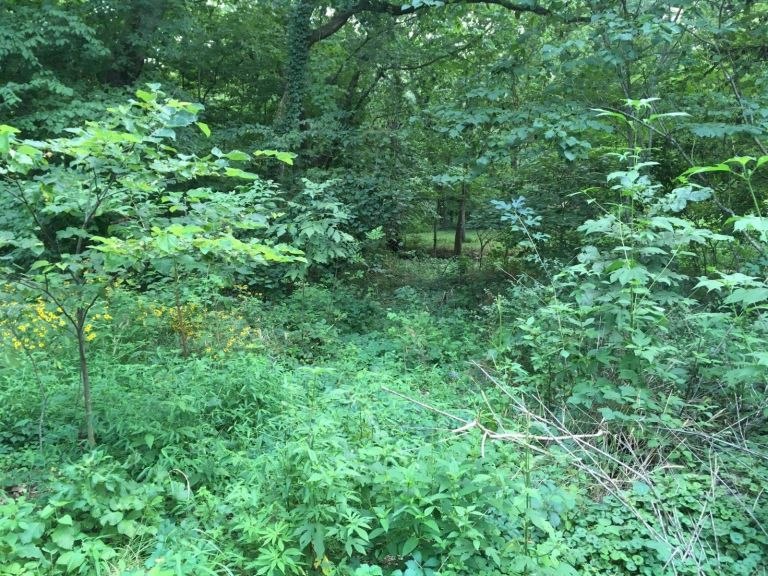 Oklahoma Land For Sale **CASH PRICE** Build a home near the river! 4
