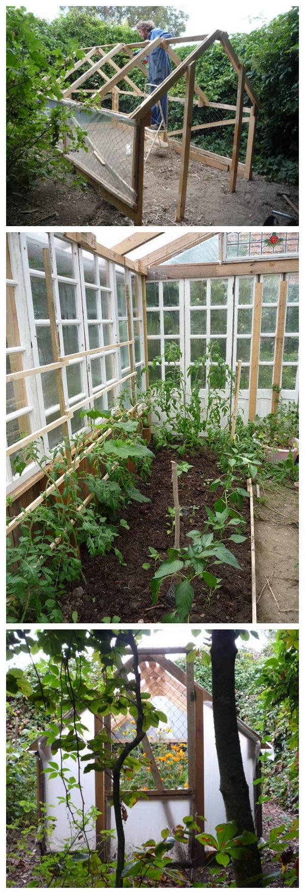 Homemade Low Cost Glass Greenhouse from Recuperated Windows and Pallet Wood.
