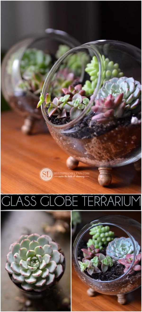 Glass Globe Terrarium with Succulent Plant. Make a beautiful glass globe terrarium with succulent plants and add timeless and classic look to any room in your home or used as a housewarming gifts for your friends and coworkers.