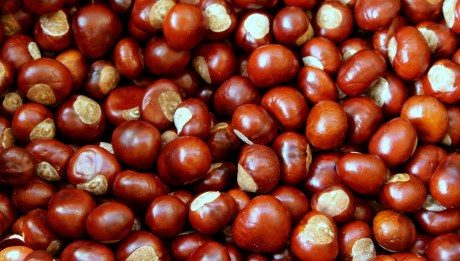 chestnuts, east coast vegetables