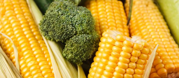 New Year update, Corn and Broccoli