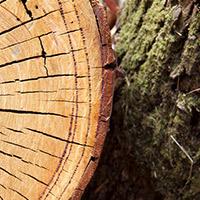 Timber Security