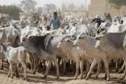 Farmers/Herders Crisis: Presidency Denies Forced Ruga Settlements
