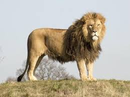 Kano Zoo Drama: Experts Capture Fleeing Lion