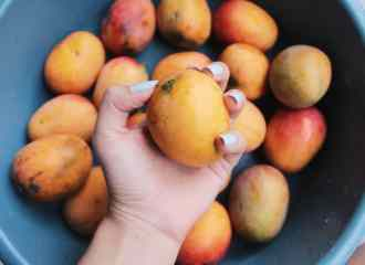 Mango for Barbados
