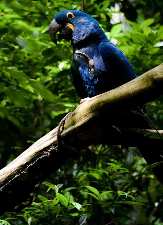 Bird in the Amazon Rainforest of Brazil