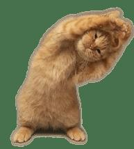kissavenyttelee