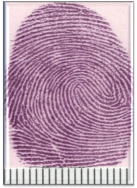 How To Search Fingerprints On Crime Scene