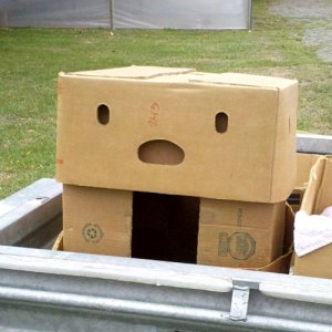 Box-pareidolia-2011-01-30