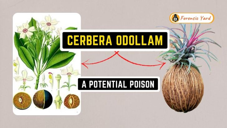 Cerbera Odollam - A Potential Poison Forensic Yard