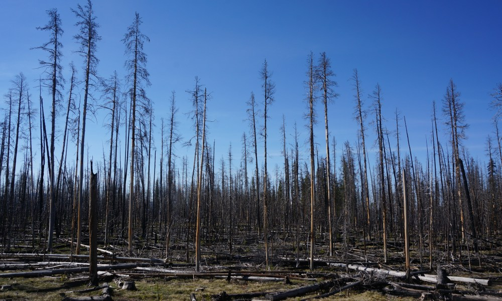 Rising lumber prices caused by wildfire in Canada