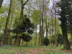 Pollok Park Trees - Forest Bathing