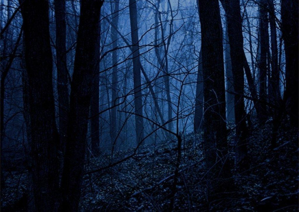 d d forest night