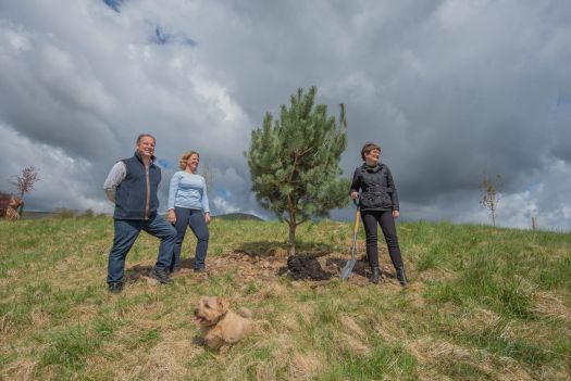 Three people planting a Scots Pine tree, on previous grazing land. There is a small dog in the foreground.