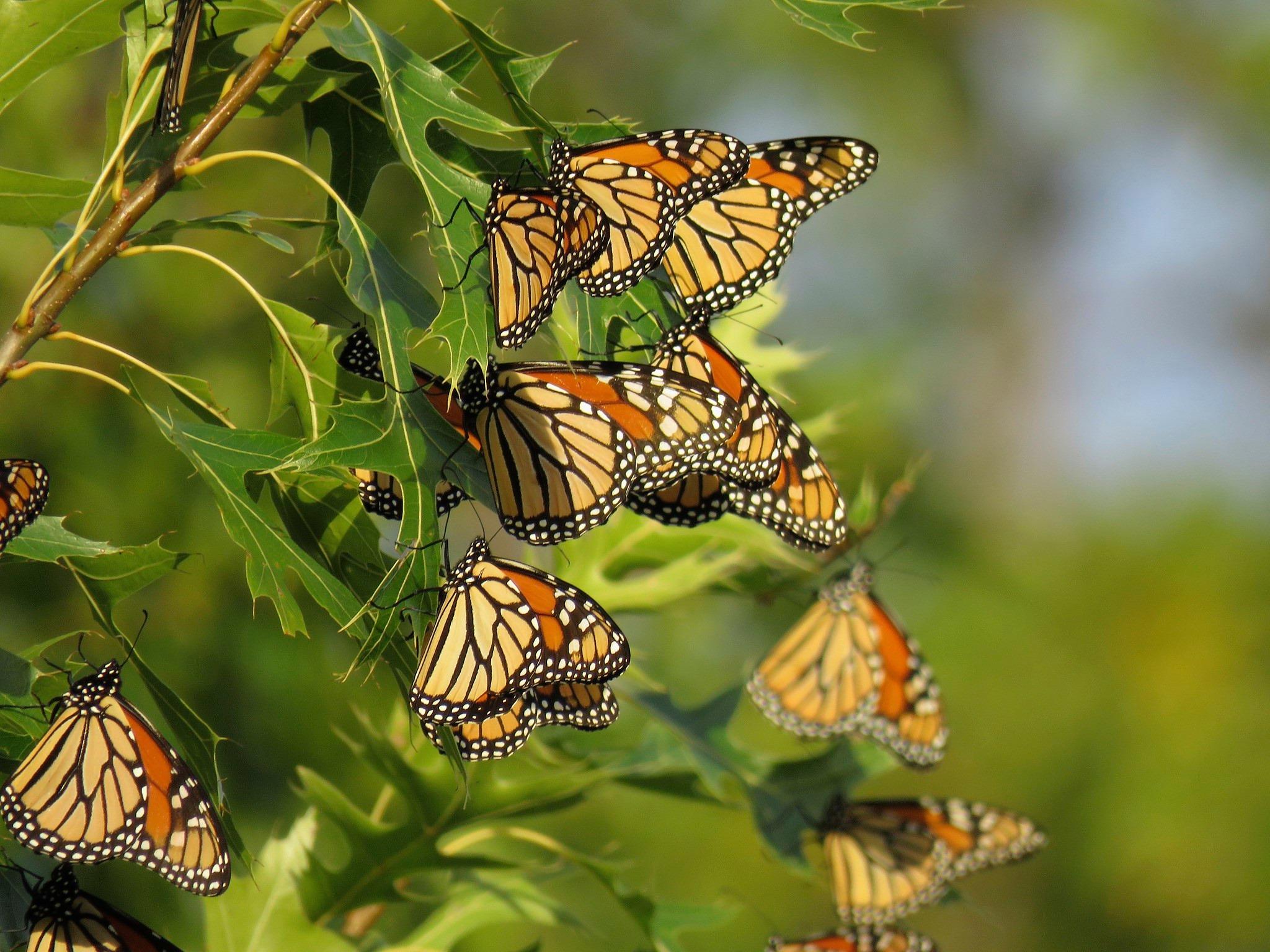 Big Oaks National Wildlife Refuge Incorporating Climate