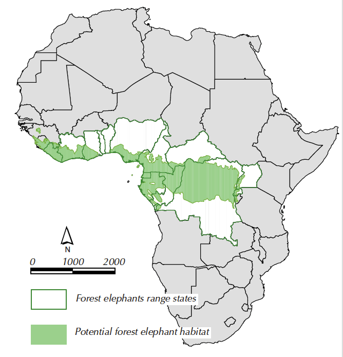 Although impressive in scale, the $8 million project has excluded forest elephants which are notoriously difficult to count, giving an incomplete picture of the african elephant story. Forest Elephants An Overview African Forest Elephant Foundation