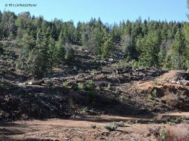 logging, plantation