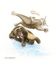 wolverine, watercolor, illustration, children's books