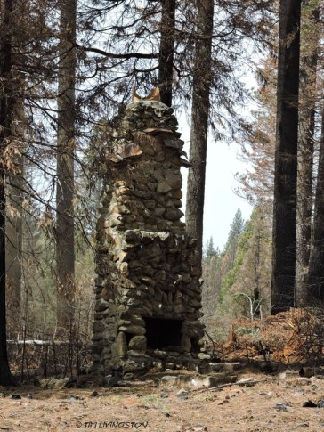 Archaeological sites, forestry