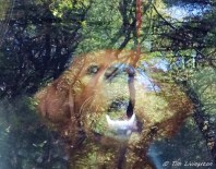 golden retriever, puppy, abstact, photography, abstract photography