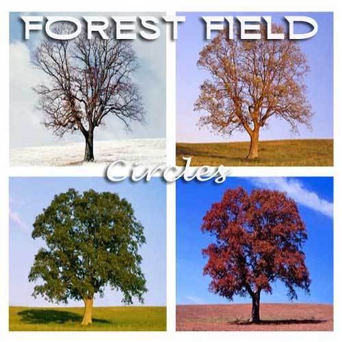forest field - circles