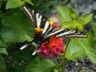 July 20, 2014 butterflies 018