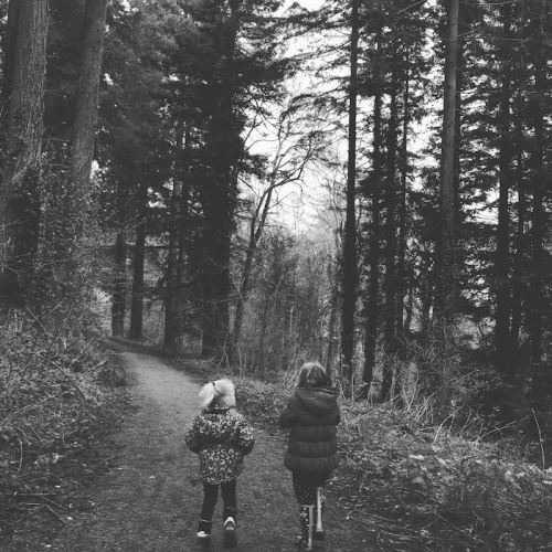half-term-forest-of-dean