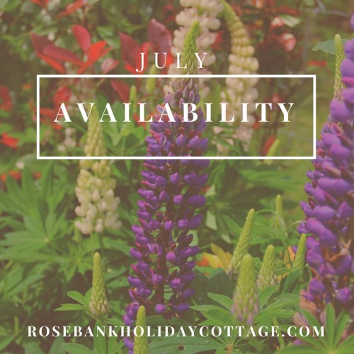 accommodation-availability-forest-of-dean