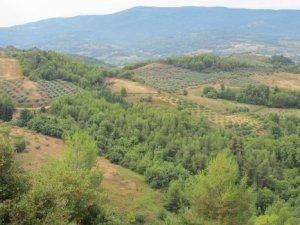 δάσωση γεωργικών γαιών