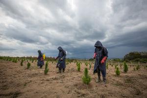 Pesticide application at Kisolanza demonstration plot in Tanzania