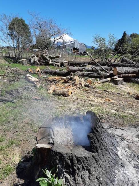How To Burn Out A Stump With Diesel
