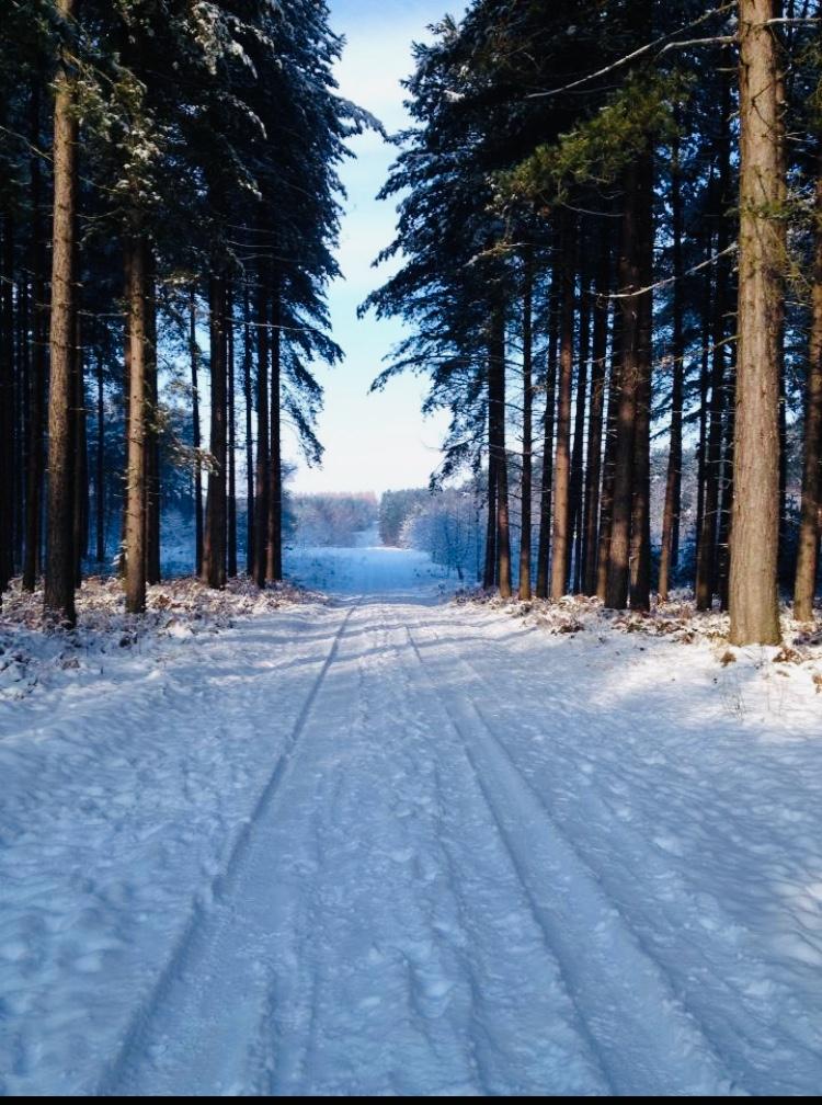 Winter PInes, Edwinstowe