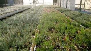 green house spread