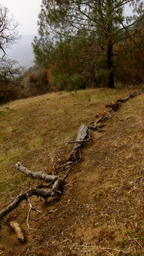 erosion control / trail re-route